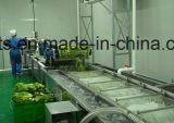 Uma bolha de vegetais de folha de alta qualidade Máquina de Lavar Roupa