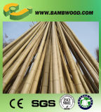 Pali di bambù verdi tinti grezzi