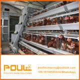 養鶏場のための自動卵の鶏の層電池ケージ