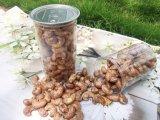 Les écrous des collations organique mixte/Daily Fruits séchés et des écrous