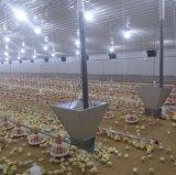 Strumentazione automatica del pollame della griglia dell'azienda agricola di pollo con il disegno libero della tettoia del pollame