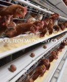 De hete Verkopende Hete Gegalvaniseerde Kooi van de Kip van het Ei voor het Landbouwbedrijf van het Vee