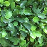 Un aspecto natural Jardín Vertical las hojas de plantas de follaje verde artificial para la boda de la Oficina de la pared Tiendas Tienda El Hotel Restaurante Casa decoración paisajismo diseño