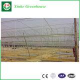 Comercio al por mayor de aluminio policarbonato transparente de efecto invernadero de tomate