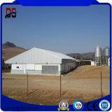 Helles Stahlkonstruktion-vorfabrizierthaus für Stahlkuh-landwirtschaftliche Gebäude