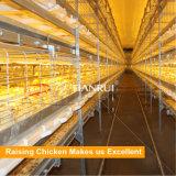 Matériel de ferme avicole de poulet à rôtir pour la production de viande
