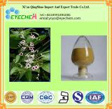 中国のハーブFevervine/Paederia Foetidaのエキスの粉