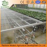 Seedbed galvanizado sumergido caliente automático del invernadero para la venta al por mayor