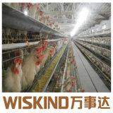 Il pollame professionale della struttura d'acciaio di fabbricazione alloggia