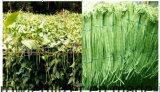 Unigrow Schmutz-Verbesserung für irgendein Gemüsepflanzen