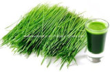 Порошок выдержки травы ячменя цены поставкы изготовления Китая самый лучший