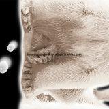 100%Polyester Zerstreung des Eisbär-3D druckte Gewebe für Bettwäsche-Set