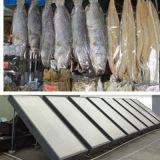 Essiccatore solare, essiccatore della verdura fresca, essiccatore dei pesci dei frutti di mare della frutta