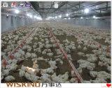 Costruzione d'acciaio per la gabbia di pollo, workshop, magazzino