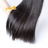 Grande estoque toda a trama reta brasileira do cabelo humano do comprimento
