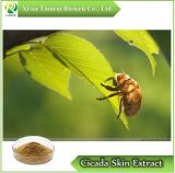 Cicada Natural Slough/Cicada polvo extracto de piel
