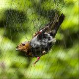 HDPE пластика по борьбе с высоты птичьего полета Net, Birding взаимозачет защиты плоды деревьев с УФ-обращения