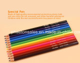 12PCS Plastic Color Pencil in Hexagonal Shape with Sharpened End