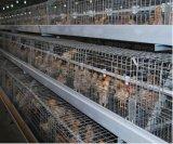 Het nieuwe Systeem van de Apparatuur van de Kooien van het Landbouwbedrijf van de Jonge kip (een Frame van het Type)