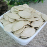Venta Hot Shine calabaza de la piel granos de semillas De Shandong Guanghua