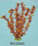 수족관 식물 (2565)