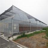 China de plástico transparente de la fábrica de película de efecto invernadero de jardín