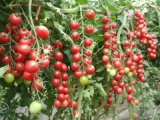 De Meststof van het aminozuur voor Druif, Tomaat, Banaan, Kiwi