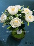 Camelia artificiale/di plastica/di seta Bush (XF-FD10) del fiore