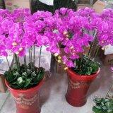 Flores artificiais da orquídea 109cm Gu922220407