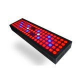 完全なスペクトル赤く青い紫外線10W 40W 65W 300W LEDは温室およびテントのために軽く育つ