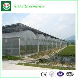 Casa verde hidropónica de cristal de la película plástica de la fábrica de China para el tomate
