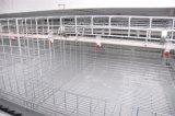 農場(Hのタイプフレーム)のための熱い浸された電流を通された鶏の家禽のケージ装置