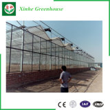 Multi-Überspannung Venlo GlasMaterila Bedeckung-Gewächshaus von der Qingzhou Fabrik