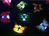 فراشة [لد] ليلة ضوء, فراشة [لد] أضواء