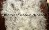 Canard gris/gris lavé responsable en bas de 90% (EN12934, USA-2000, JIS, GB/T17685-2016)
