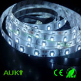 SMD2835 LED Flexible device Strips with 3 Years Warranty for House/Hotel/Lightbox Decoration
