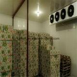 Conservazione frigorifera di alta qualità, cella frigorifera, surgelatore, parti di refrigerazione