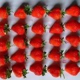 De fraises congelées (American 12)