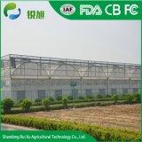 Seul Span/film plastique multi-span serres agricoles ou de légumes et fruits de serres
