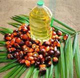 Macchina della pressa dell'olio di granelli della palma di prezzi di promozione singolo nel tipo caldo e freddo