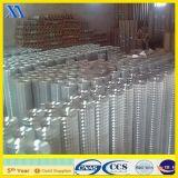 2X2 Pulgadas Mallas Soldadas para Jaula de pollo (XA-WM53)