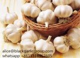 Aglio fresco di bianco di Jinxiang del nuovo raccolto all'ingrosso 2017