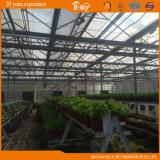 Greenhouse en verre avec le système de régulation Chine Supplier d'environnement d'Auto