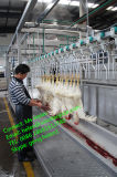 линия Slaughtering цыпленка машины Slaughtering цыпленка 300-500/H малая