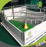 Het Europese Gebruik van het Krat van de Stijl Open in Varkensfokkerij