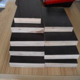 Hardwood Core Brown Film Faced Plywood Melhor qualidade