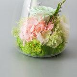 별자리는 선물을%s 빛을%s 가진 꽃을 보존했다