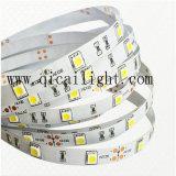 Tira flexible del precio competitivo 5050 de calidad superior estupendos LED del brillo