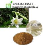 Lâmpada de lírio extraia leite em pó, extracto de lírio, Baihe Bulbus Lilii
