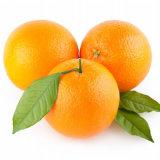 100%の純粋で自然なスプレー-飲料のための乾燥された新しいオレンジジュースの粉